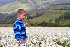 Menino no campo do poeticus branco do narciso na mola fotografia de stock royalty free