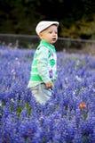 Menino nos Bluebonnets Fotos de Stock