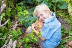Menino novo feliz que guarda uma abóbora orgânica cultivado em casa imagem de stock