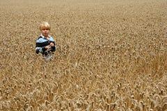 Menino novo no campo de trigo imagens de stock