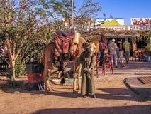 Menino novo que aluga camelos ao turista Fotos de Stock