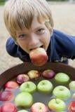 Menino novo que sacode-se para maçãs Fotografia de Stock