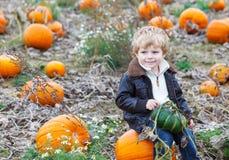 Menino pequeno da criança no campo da abóbora Imagens de Stock