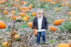 Menino pequeno da criança no campo do remendo da abóbora Fotografia de Stock