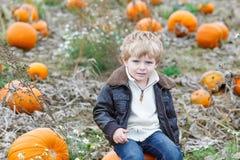 Menino pequeno da criança no campo do remendo da abóbora Fotos de Stock