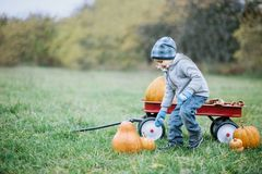 Menino pequeno feliz da criança no remendo da abóbora no dia frio do outono, com muitas abóboras para o Dia das Bruxas ou a ação  Fotos de Stock Royalty Free
