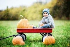 Menino pequeno feliz da criança no remendo da abóbora no dia frio do outono, com muitas abóboras para o Dia das Bruxas ou a ação  Imagens de Stock Royalty Free