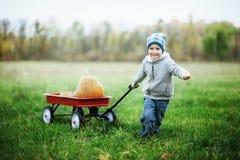 Menino pequeno feliz da criança no remendo da abóbora no dia frio do outono, com muitas abóboras para o Dia das Bruxas ou a ação  Fotos de Stock