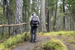 Menino que anda apenas na floresta verde Foto de Stock