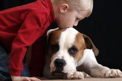 Menino que beija o cão imagens de stock royalty free