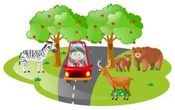 Menino que conduz no safari aberto Fotos de Stock Royalty Free
