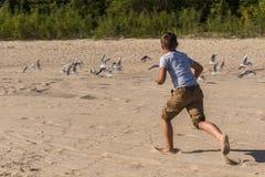 Menino que corre após gaivotas na praia Fotografia de Stock