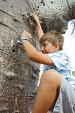 Menino que escala uma árvore Foto de Stock