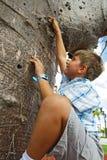 Menino que escala uma árvore fotos de stock