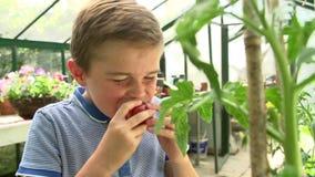 Menino que escolhe e que come tomates cultivados em casa na estufa filme