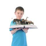 Menino que guarda o livro de animais selvagens no fundo branco Fotografia de Stock Royalty Free