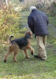 Menino que joga com cão Fotografia de Stock Royalty Free