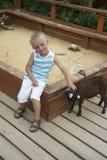 Menino que joga com a cabra preta pequena na caixa de areia Fotografia de Stock