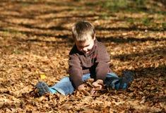 Menino que joga com folhas Fotos de Stock Royalty Free
