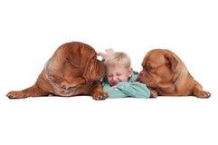 Menino que joga com seus cães Fotografia de Stock Royalty Free