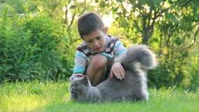 Menino que joga com um gato britânico na grama video estoque