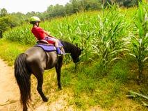 Menino que monta um cavalo que seja confundido pelo campo de milho saboroso imagens de stock royalty free