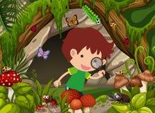 Menino que olha insetos na floresta Fotos de Stock