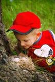 Menino que olha no ninho com ovo Imagem de Stock
