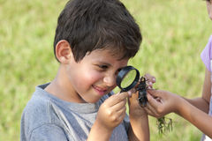 Menino que olha o besouro através da lupa Imagem de Stock Royalty Free