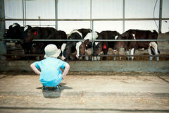Menino que senta e que olha as vacas imagens de stock