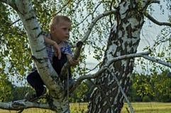 Menino que senta-se em uma árvore nas madeiras Fotos de Stock