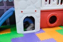 Menino que tem o divertimento no parque de diversões das crianças e no centro interno do jogo Criança que joga com os brinquedos  Foto de Stock Royalty Free