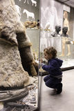 Menino que visita o museu histórico Fotos de Stock