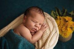 Menino recém-nascido de sono Imagens de Stock