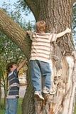 Meninos que escalam uma árvore grande Foto de Stock
