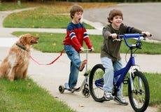 Meninos que jogam com o cão Fotografia de Stock Royalty Free