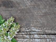 Mennica liście na drzewie i kwiaty Fotografia Stock