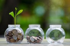 Menniczy drzewny Szklany słój rośliny dorośnięcie od monet na zewnątrz szklanego słoju pieniądze inwestycji i oszczędzania pienię fotografia stock