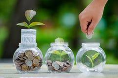 Menniczy drzewny Szklany słój rośliny dorośnięcie od monet na zewnątrz szklanego słoju pieniądze inwestycji i oszczędzania pienię zdjęcie stock