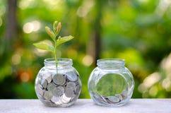 Menniczy drzewny Szklany słój rośliny dorośnięcie od monet na zewnątrz szklanego słoju na zamazanym zielonym naturalnego tła pien obraz stock