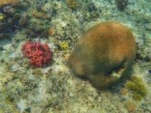 meno νησιών της Ινδονησίας gili lombok κοντά στον υποβρύχιο κόσμο χελωνών θάλασσας Στοκ Εικόνες
