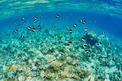 meno de lombok d'île de l'Indonésie de gili près de monde sous-marin de tortue de mer images stock