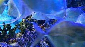 meno de lombok d'?le de l'Indon?sie de gili pr?s de monde sous-marin de tortue de mer clips vidéos