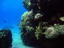 meno för lombok för giliindonesia ö nära den undervattens- världen för havssköldpadda fotografering för bildbyråer