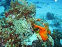 meno för lombok för giliindonesia ö nära den undervattens- världen för havssköldpadda Royaltyfri Fotografi