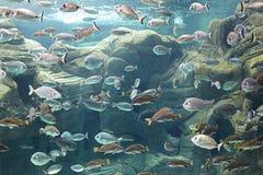 meno för lombok för giliindonesia ö nära den undervattens- världen för havssköldpadda Royaltyfria Bilder