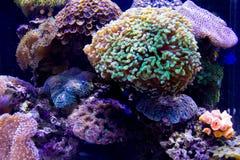 meno för lombok för giliindonesia ö nära den undervattens- världen för havssköldpadda Arkivbild