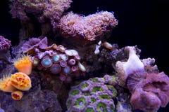 meno för lombok för giliindonesia ö nära den undervattens- världen för havssköldpadda Arkivfoto