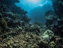meno för lombok för giliindonesia ö nära den undervattens- världen för havssköldpadda Royaltyfri Bild