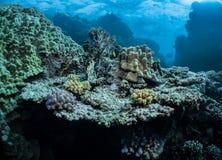 meno för lombok för giliindonesia ö nära den undervattens- världen för havssköldpadda Royaltyfria Foton